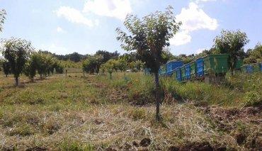 3G видеонаблюдение на пчелини и овощни градини през GSM мрежата