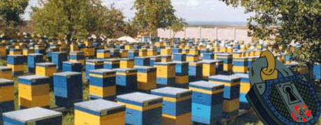 Охрана на пчелни кошери